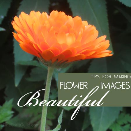 Tips for Making Beautiful Flower Images