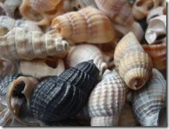 1204876_seashellsPhotobyAnna
