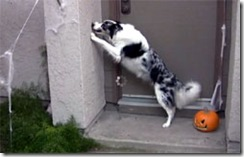 Costumed Pets go Trick-or-Treating: Funny Halloween video