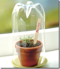 spring-in-a-bottle-craft