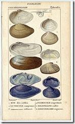 vintage sea shells beach cottage decorating