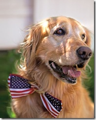 fourth_of_july_dog_costume_ms