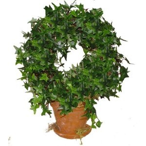 How to Make a Topiary