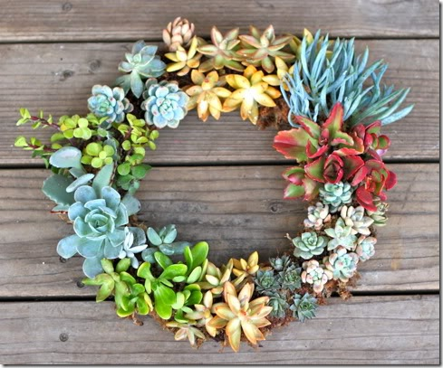 http://www.finecraftguild.com/wp-content/uploads/2012/01/Succulent_wreath_prudentbaby_thumb.jpg