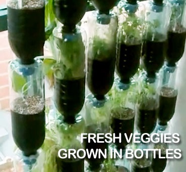 fresh vegetables bottle garden :: vertical gardening :: FineCraftGuild.com
