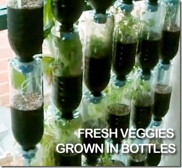 Recycled Plastic Bottles = Awesome Vertical Vegetable Garden