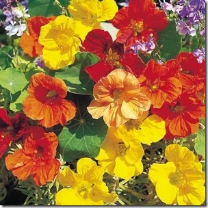 nasturtium seeds :: fresh vegetables bottle garden :: vertical gardening :: FineCraftGuild.com