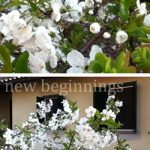spring_cherry_blossom.jpg