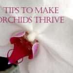 Reviving Orchids