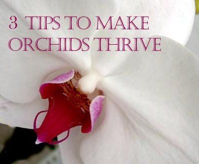 Reviving Orchids