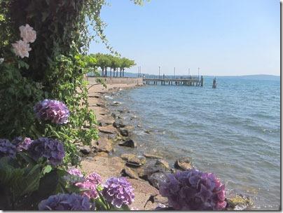 hydrangeas_bracciano_lake