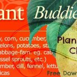 Companion Planting Guide, a Free Download of Plants' Best Friends