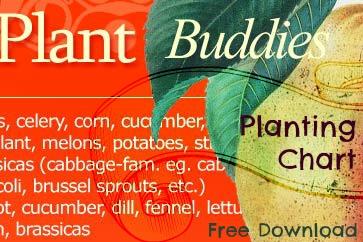 compagnon planting guide :: finecraftguild.com