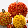 50+ No Carve Pumpkin Decorations – Part 3