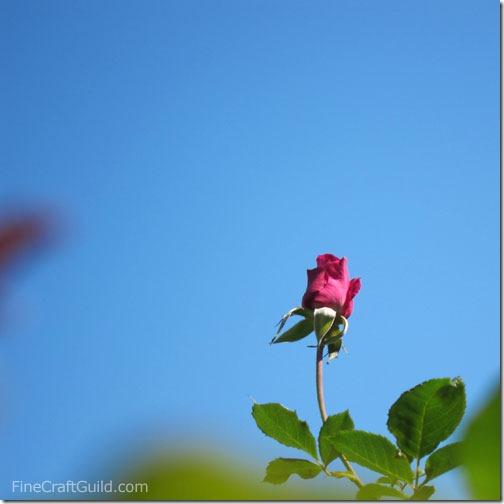 rose_victory