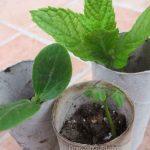 toilet paper seedling holders