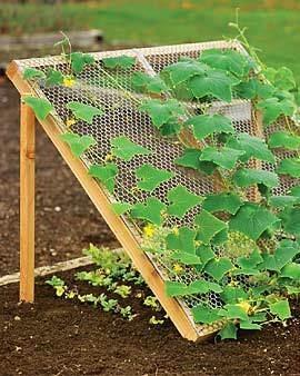 cucumber trellis :: vertical gardening :: finecraftguild.com