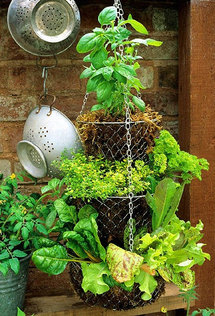 vertical vegetable garden herbs :: finecraftguild.com