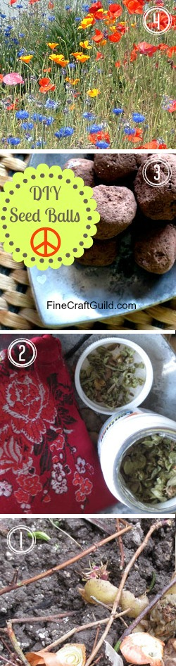 how to grow wildflowers fr seed :: FineCraftGuild.com