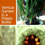 Indoor Vertical Gardening Plastic Bottles: A great idea!