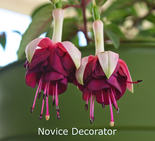 Simple Spring Gardening Tips :: how to grow fuchsias