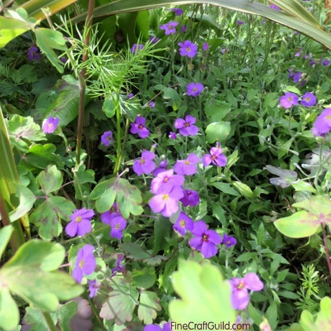 how_to_grow_a_lush_garden