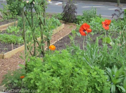 curbside_vegetable_garden_2