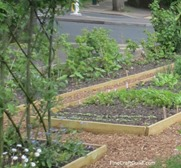 curbside_vegetable_garden_4