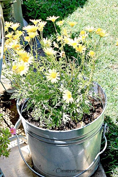 Lemonade bottle daisy