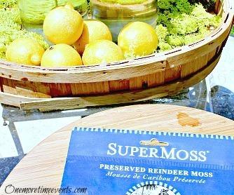 Lemonade bottle moss