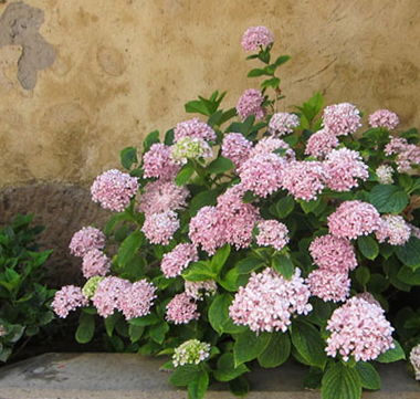 flower images horizontal line